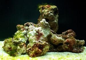 Nanosaltkaret efter två veckor